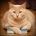 Cat_on_a_Book